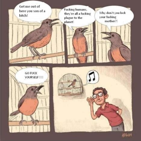 Pretty birdy